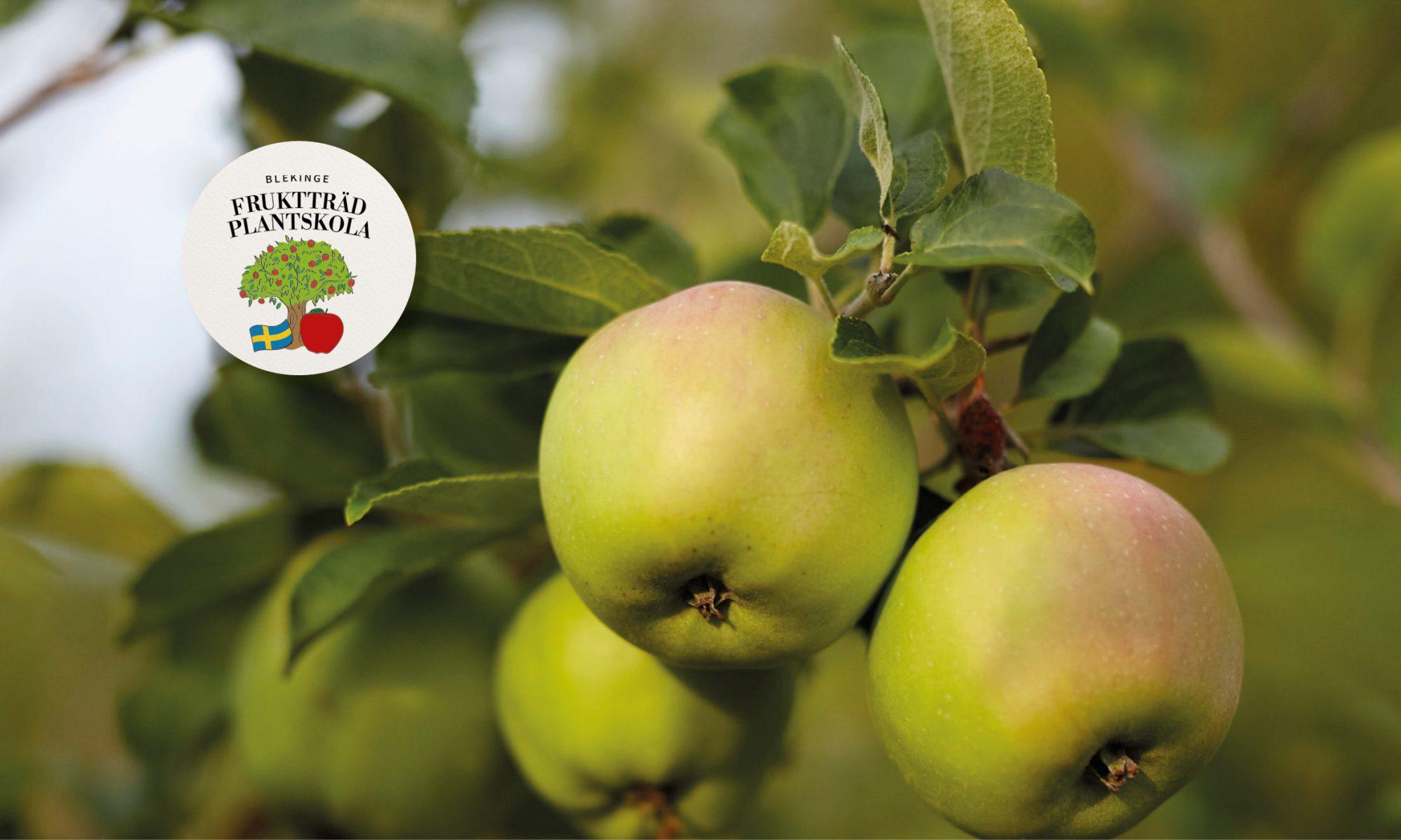 Blekinge Fruktträd Plantskola